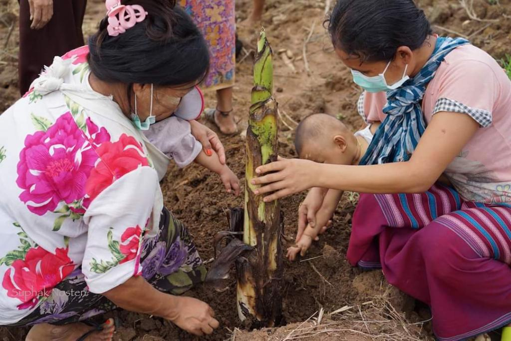 Planting bananas is a friendly occupational activity for children and mothers in TB center