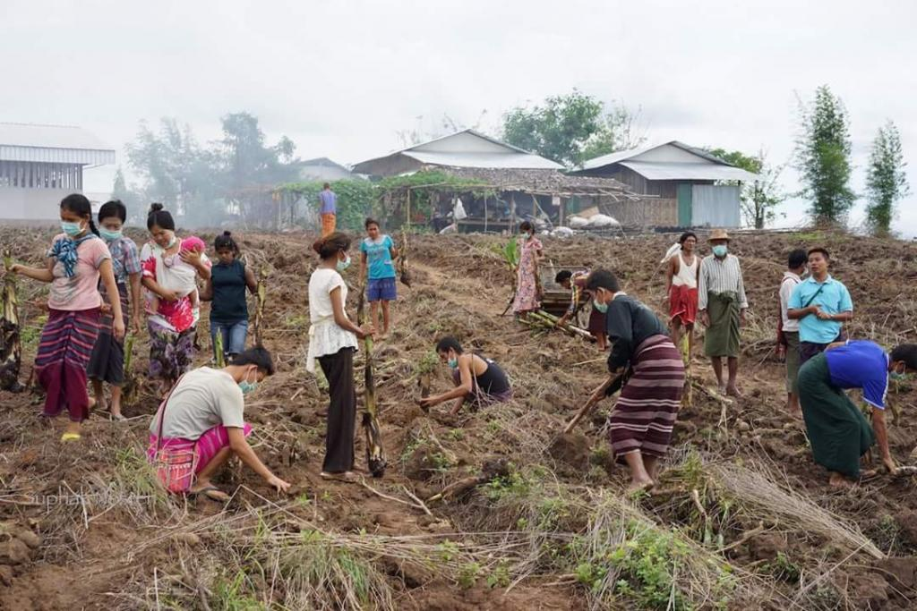 Planting banana trees is healthy occupational activity for TB patients in TB center